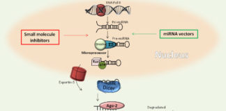 MicroRNas: beating cancer with new powerful weapons