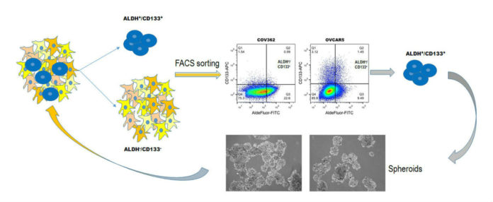 New therapeutic targets in ovarian cancer stem cells